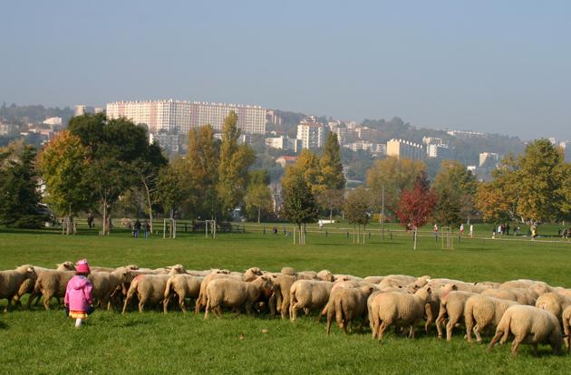 Parc de Gerland (Lyon), expérimentation en 2007 d'un berger urbain valorisant le Parc (en partenariat avec la Communauté Urbaine du Grand Lyon).