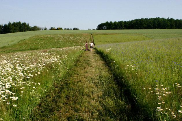 Vernand (Loire), projet sur une exploitation agricole, principe de bandes cultivées permettant de limiter l'érosion séparées par des chemins d'exploitation connectés aux chemins de randonnée.