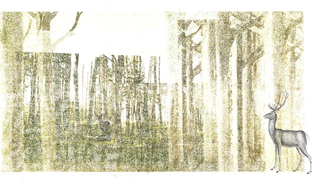 Bois sylvestres2
