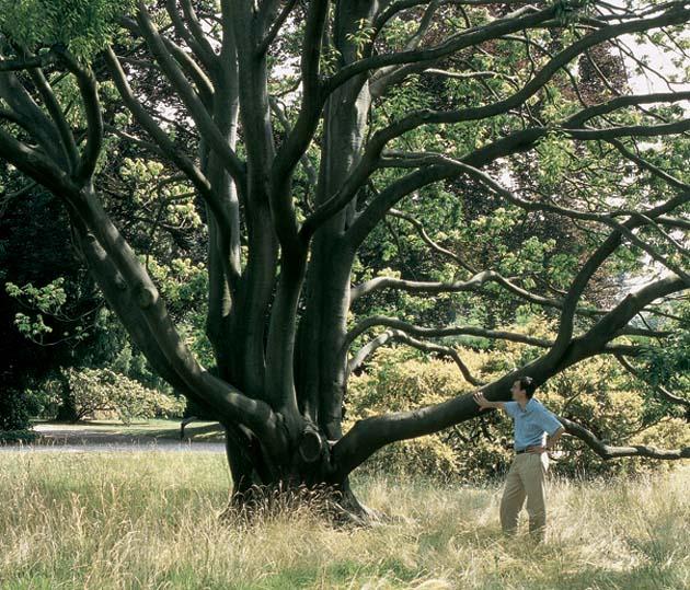 Le monde des chênes