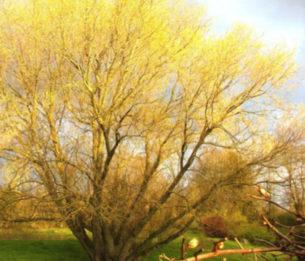 Par Geneviève et Alain Sauvé  En commençant notre collection d'arbres et d'arbustes dans un lieu nommé «les noues», nous n'imaginions pas que cette dénomination était à ce point, un résumé très exact des conditions naturelles du site et que nous devrions autant en tenir compte.