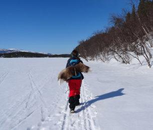 Par Lucie d'Heygère  Troisième épisode d'une année dans le Finnmark, Laponie norvégienne  Le soleil brille. C'est une belle journée d'hiver. Nous sommes fin avril. Mais sous ces latitudes, il n'y a que deux saisons, un long hiver et un court été...