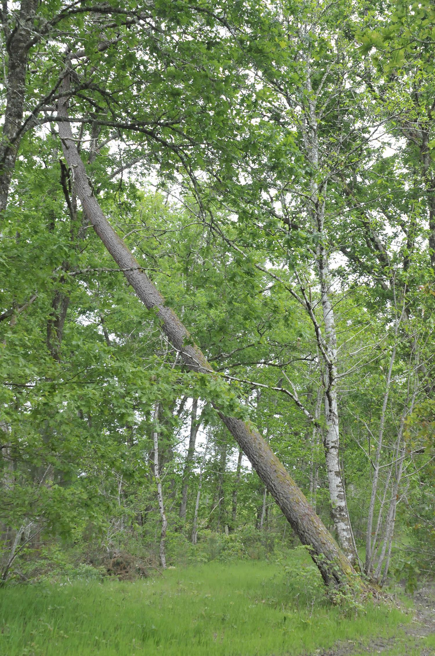 Pour une forêt diversifiée