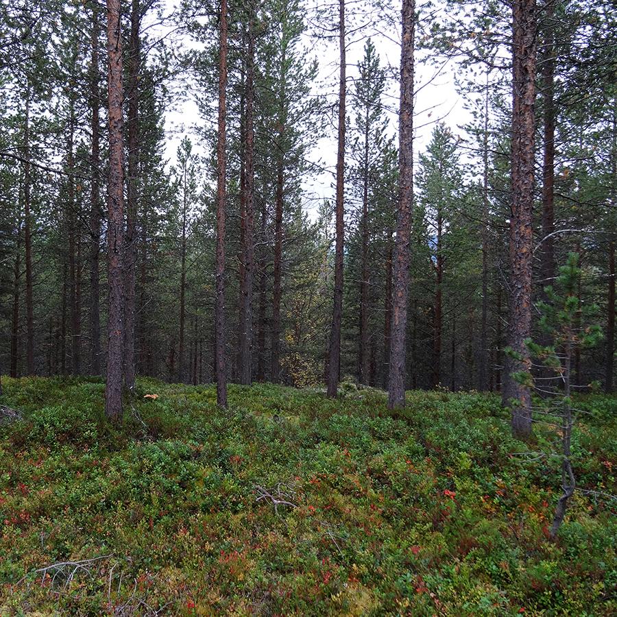 Une année dans le Finnmark, épisode 9