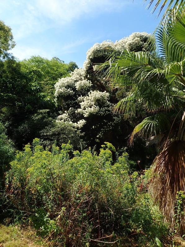 Le Jardin botanique de la Villa Thuret